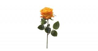 Rose Simone Yellow Single-Stem