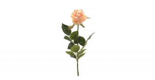 Rose Simone Peach Single-Stem