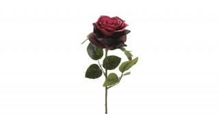 Rose Simone 45 cm