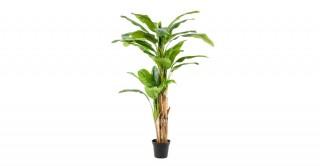 Banana 210Cm Trees