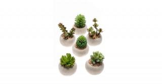 Succulent Mix X6 In Cement Pot