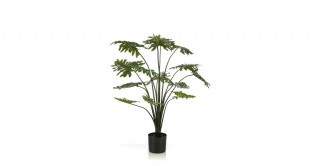 Philodendron 95Cm Trees