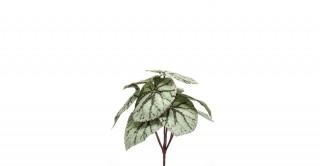 Begonia Green Leaves Bush