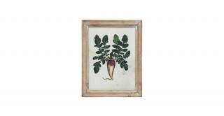Lesley Radish Framed Wall Art (Random 1pc)
