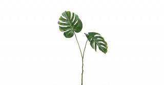 Monstera Green Leaf Spray