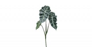Alocasia Green Leaf Spray