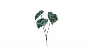 Anthurium Green Leaf Spray