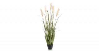 Pampas 130Cm Potted Plant