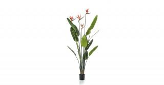 Strelitzia Tree W 4 Flowers 150cm