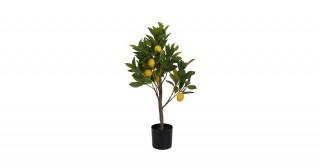 Lemon Tree 72Cm