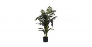 Areca Palm 130cm/24 Lvs In Pot