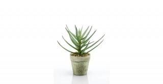 Aloe 18cm In Pot