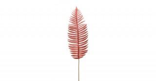 Fern Leaf Coral 97Cm
