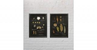 Dried Botanicals in Rectangle Shadowbox Frame (Random 1 pc)