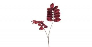 Melianthus Spray Burgundy 95 cm