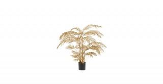 Areca Palm 31Lvs Gold 145 cm