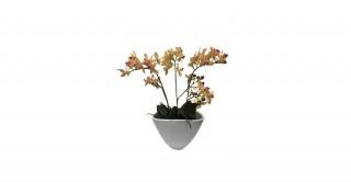 Phalaenopsis Mini 35 cm (3Pcs)